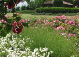 1. il giardino di un  vecchio mulino