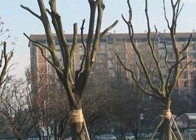 Da Ex fiera milano a Quartiere  Bonola Milano