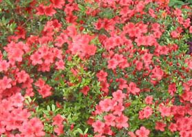 7. colori di primavera